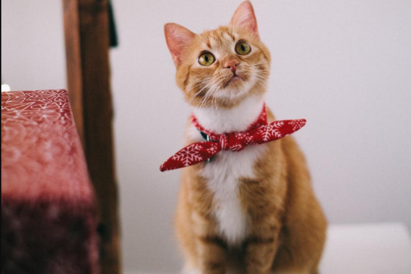 Bilim insanları: Kediler de en az köpekler kadar sadık   Independent Türkçe