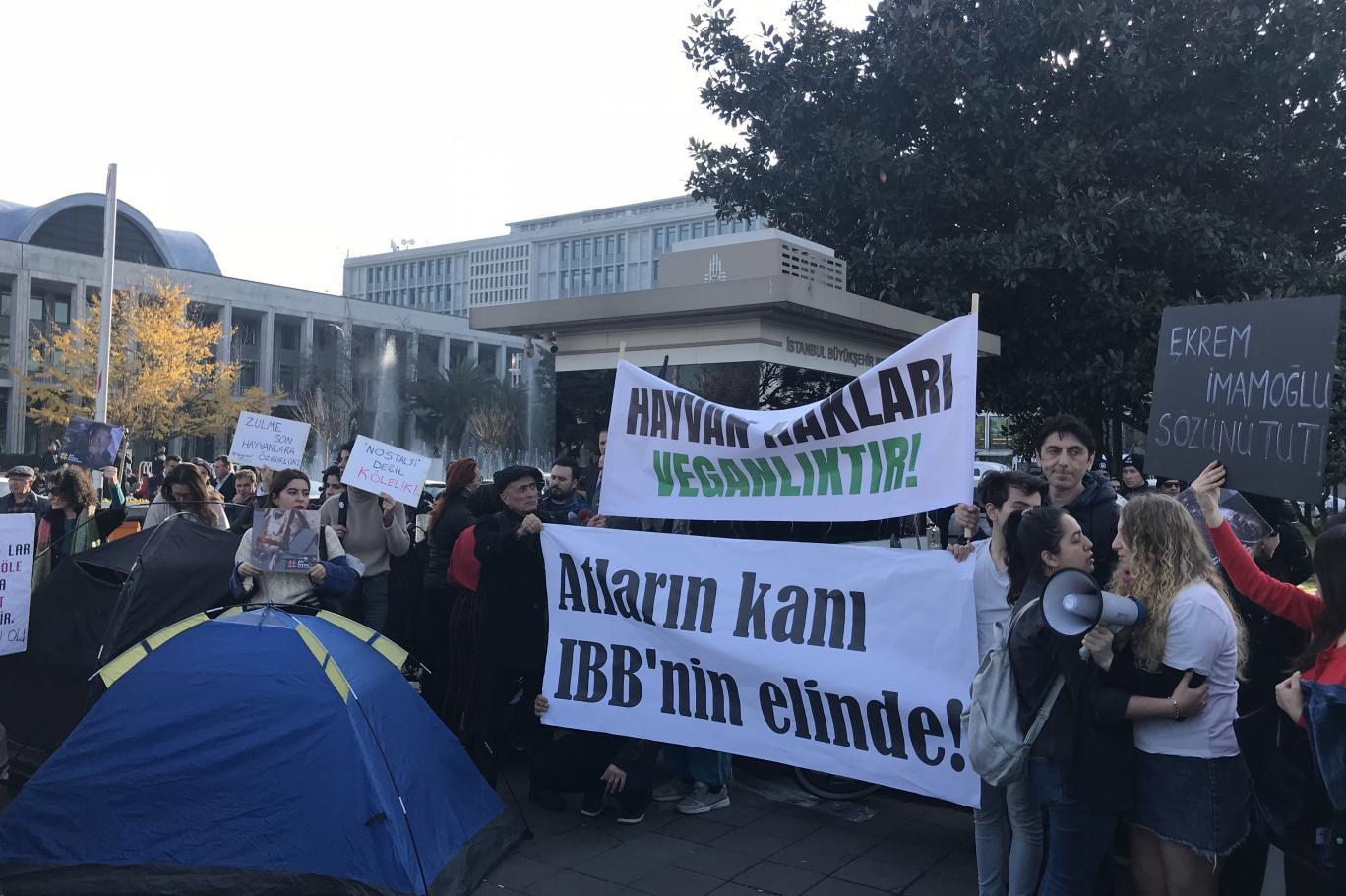 Faytonların kaldırılmasını isteyen hayvan hakları savunucuları, atların  ölümünden İBB'yi sorumlu tuttu | Independent Türkçe