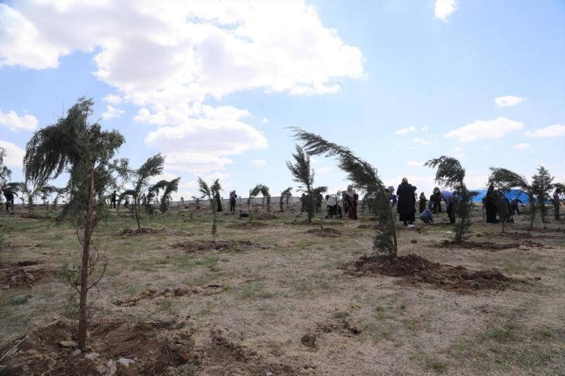 ağaçlandırma