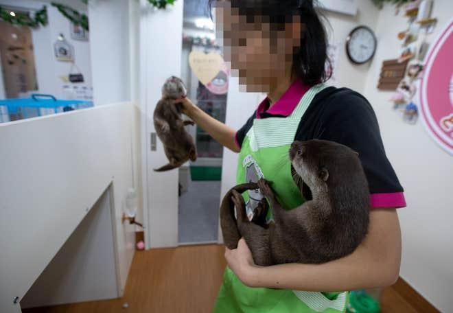 1023682-credit-world-animal-protection-aaron-gekoski.jpg