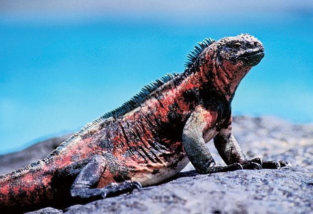 Galapagos Adaları.jpg