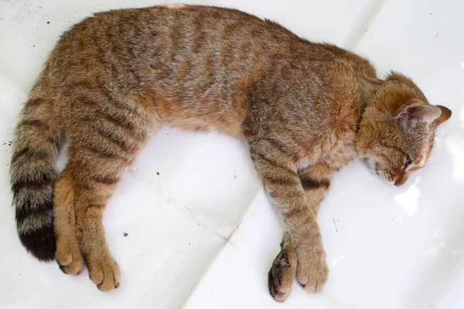 Fox-cat-3.jpg