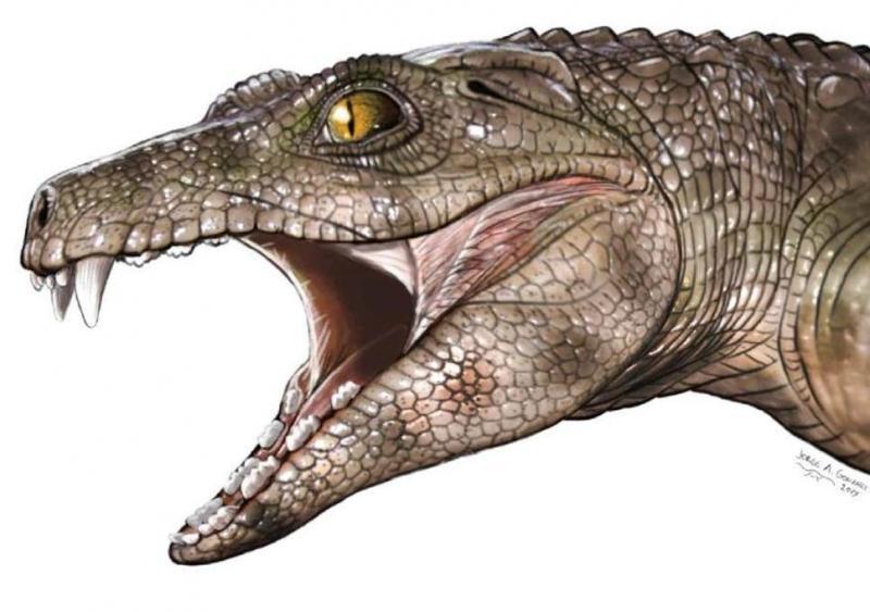 crocodile independent.jpg