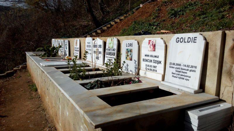 Hayvan Mezarlığı Greendog.jpg