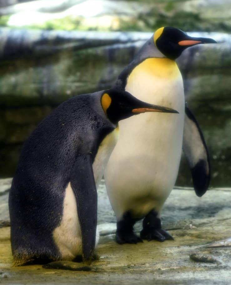 penguen - reuters - 3.jpg