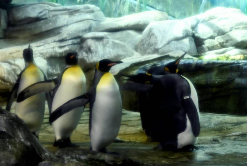 penguen - reuters -2.jpg