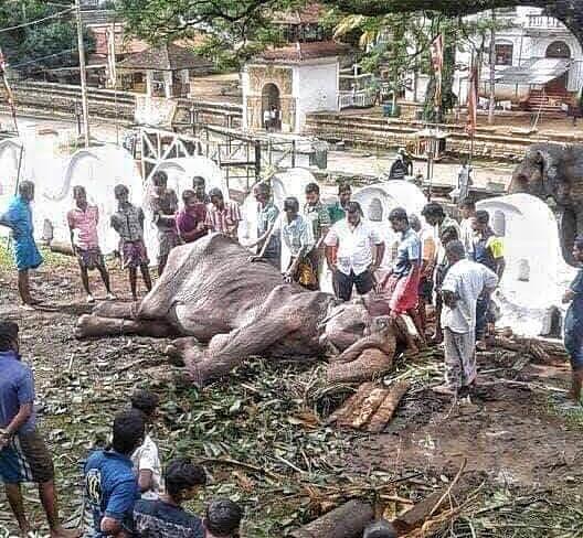 save elephant foundation.jpg