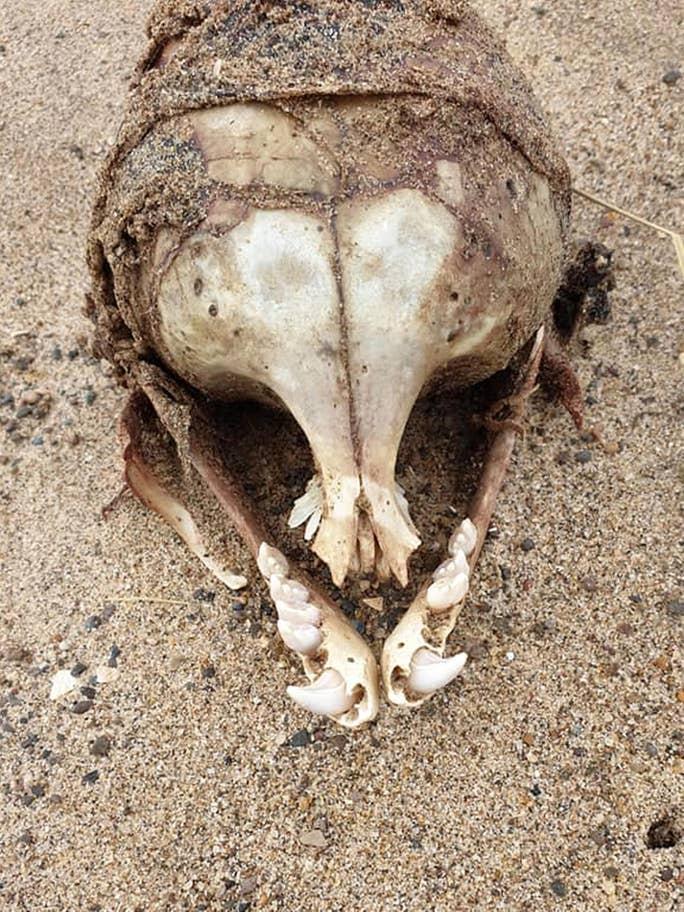 kafatası2.jpg