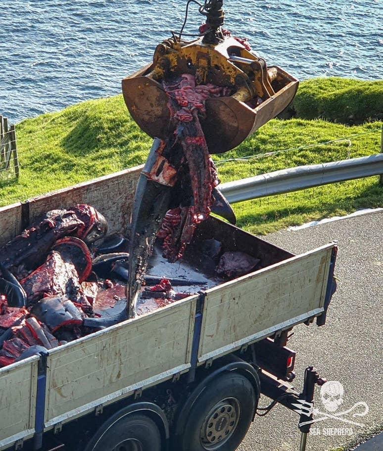 balina - sea-shepherd-Birleşik-Krallık - 3.jpg