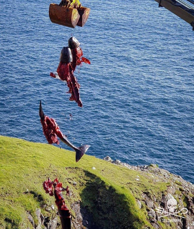 balina - sea-shepherd-Birleşik-Krallık - 5.jpg