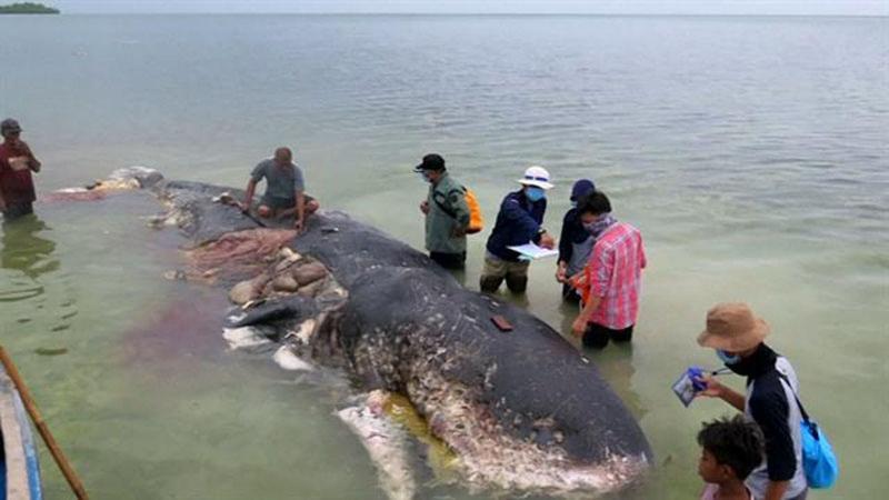 ölü balina reuters.jpg
