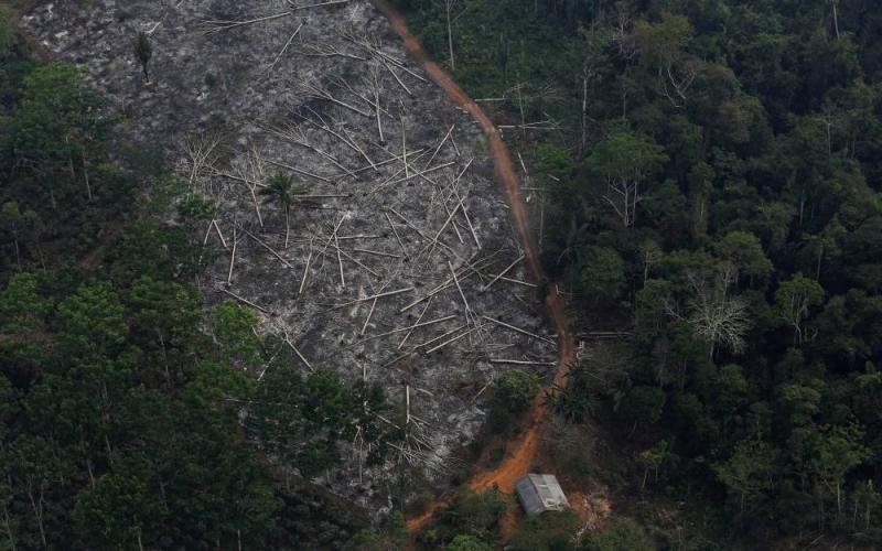 brezilya ormansızlaşma reuters.jpg