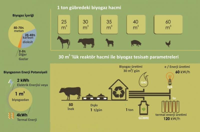 Şekil 3 - Hayvan türüne bağlı olarak biyogaz üretimi.jpg