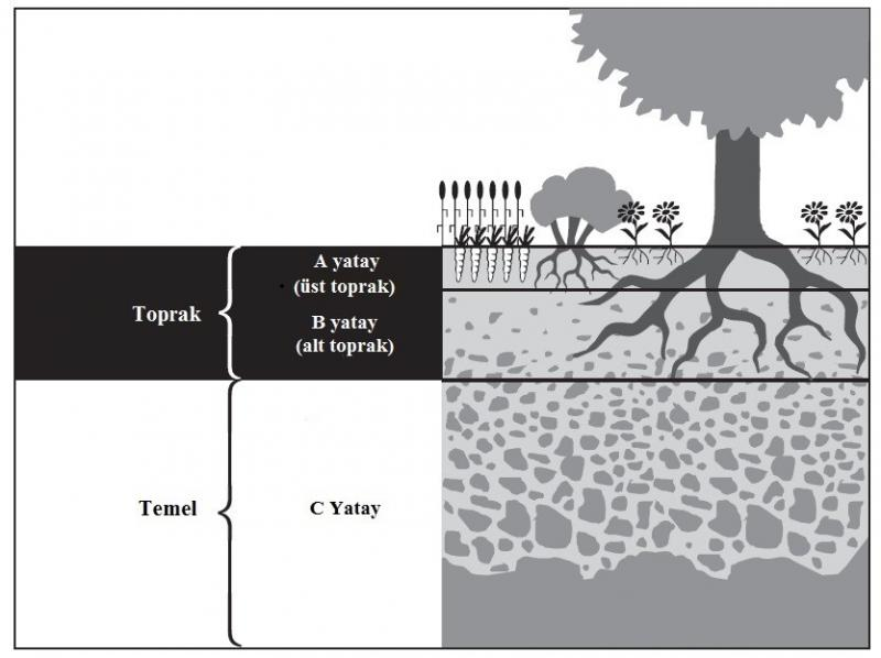 Şekil 6 Siyah Alan bitkisel toprak kısmı.jpg