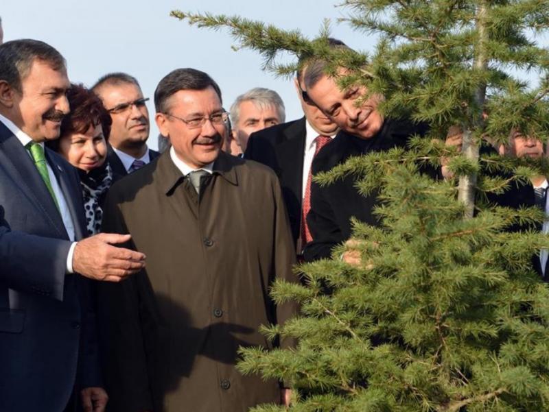 Ağaç Dİkme Bayamı fikri. Gökçek Erdoğan AA