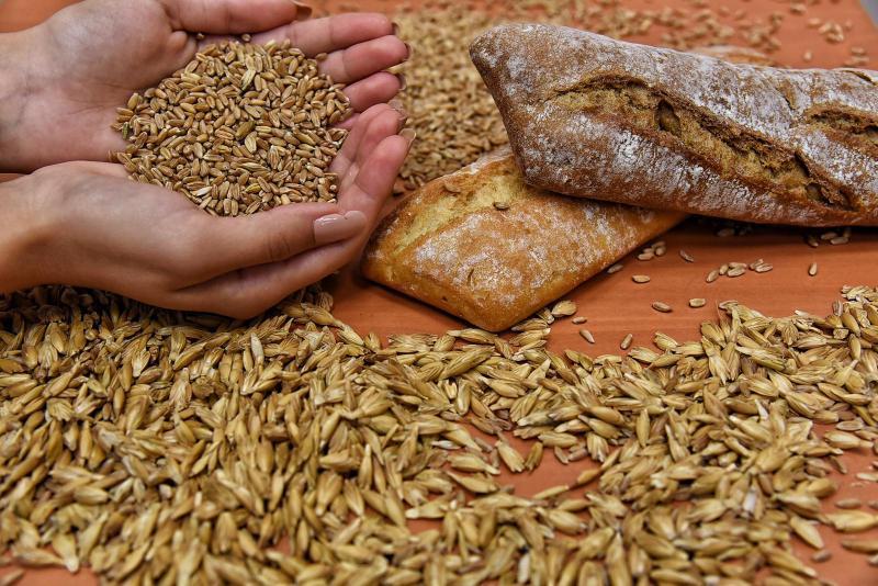 kızıl buğday ve ekmek.jpeg