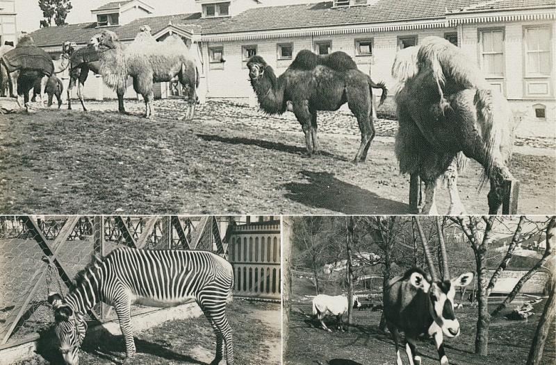 Yıldız Sarayı hayvanları.jpg