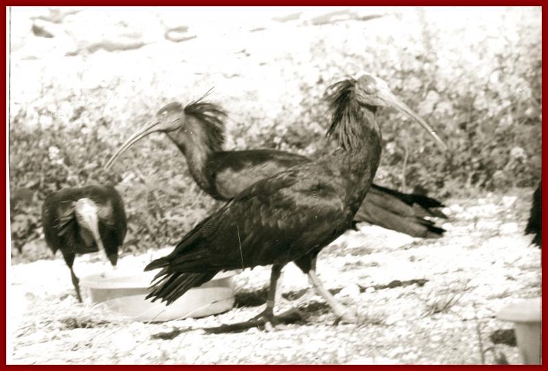 keleynak kuşları şeyhmus çakırtaş.jpg