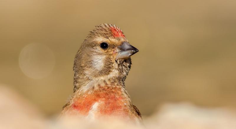 Kuş 2. Vedat Soğukpınar. jpg