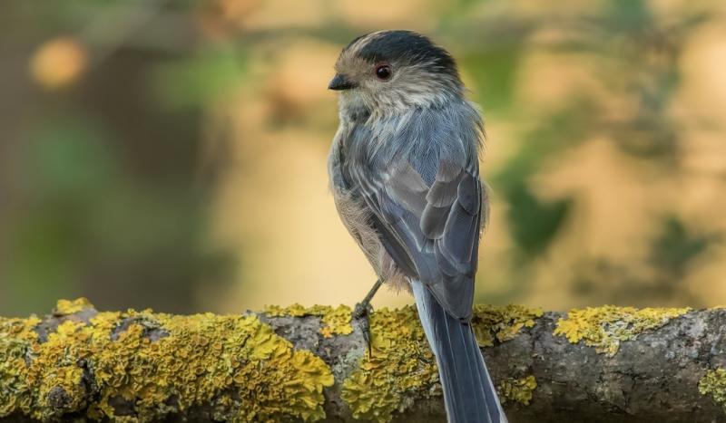 Kuş 3. Vedat Soğukpınar..jpg
