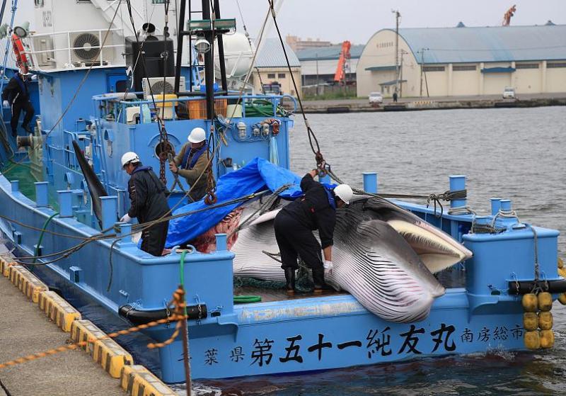 japonya balina reuters 2.jpg