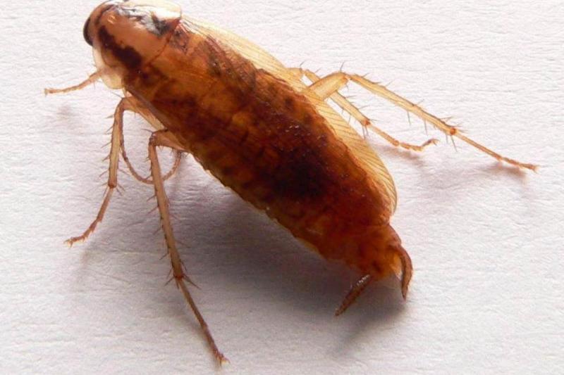 böcek.jpg