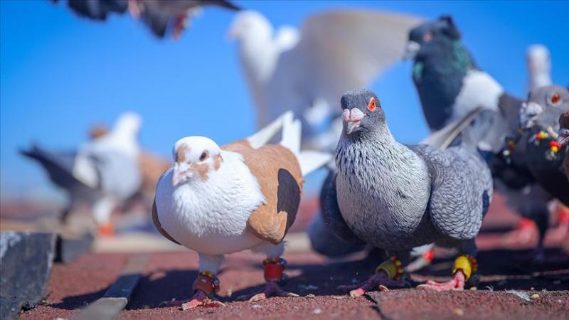 kuşlar.jpg