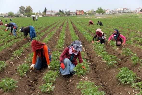 çiftçi tarım gıda İHA.jpg