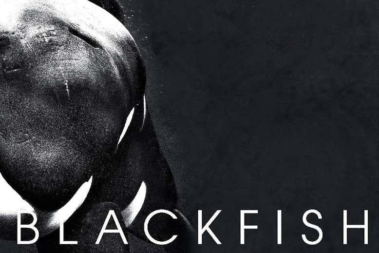 blackfish_magnolia-pictures_web.jpg