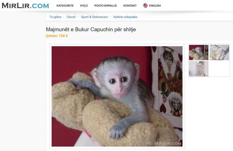 maymun.jpg