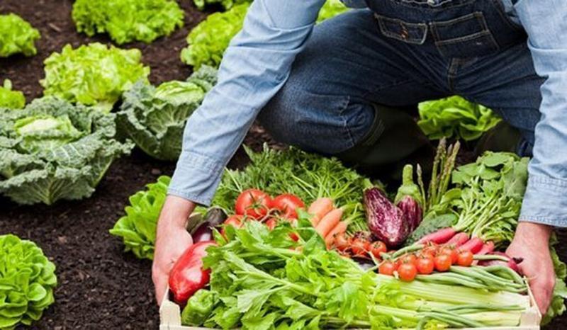 organik tarım 3.jpg