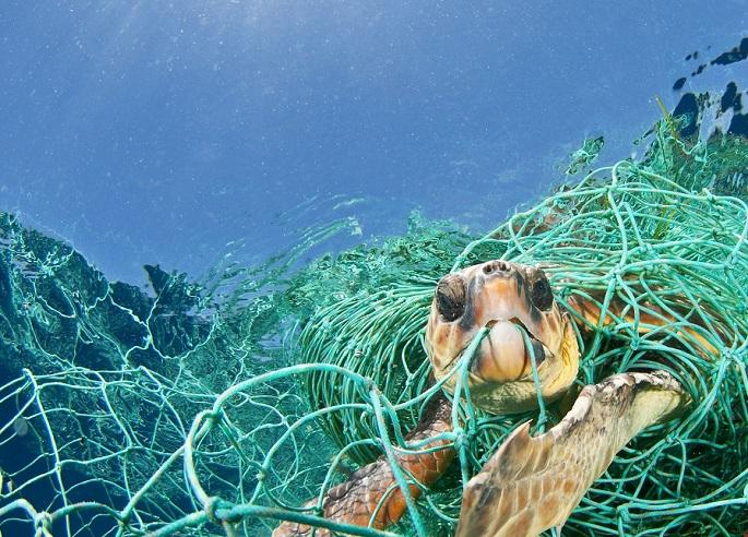 sea-turtle-caught-in-ghost-gear-feature.jpg
