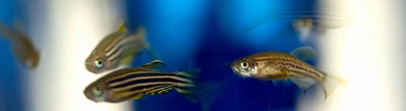 fish_small.jpg