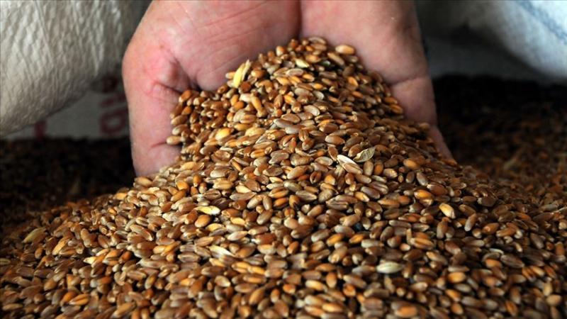 buğday3.jpg
