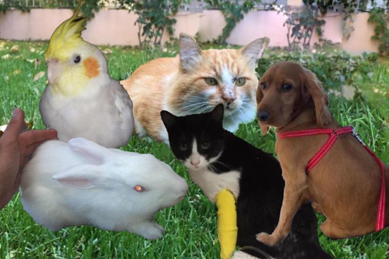 Kolaj hayvanlar.jpg