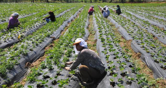 Çiftçi tarım emek İHA.jpg