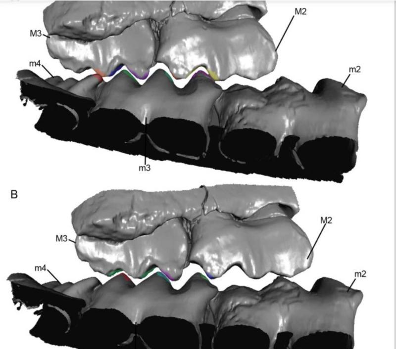 tooth-2.jpg