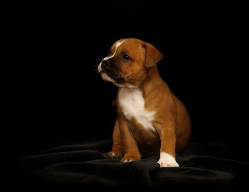 puppy-2166763_1920.jpg
