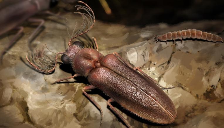 210119145609-beetle-fossil-restricted-exlarge-169.jpg
