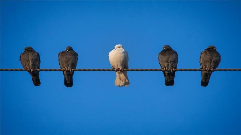 Güvercin AA.jpg