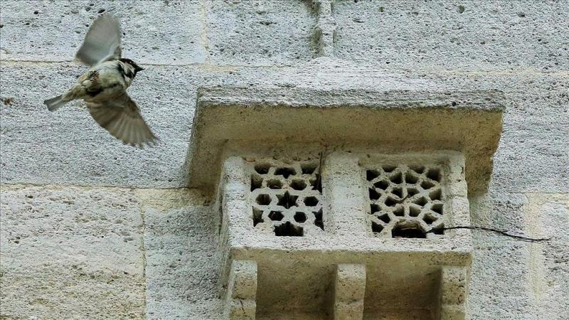 Kuş evleri AA 2.jpg