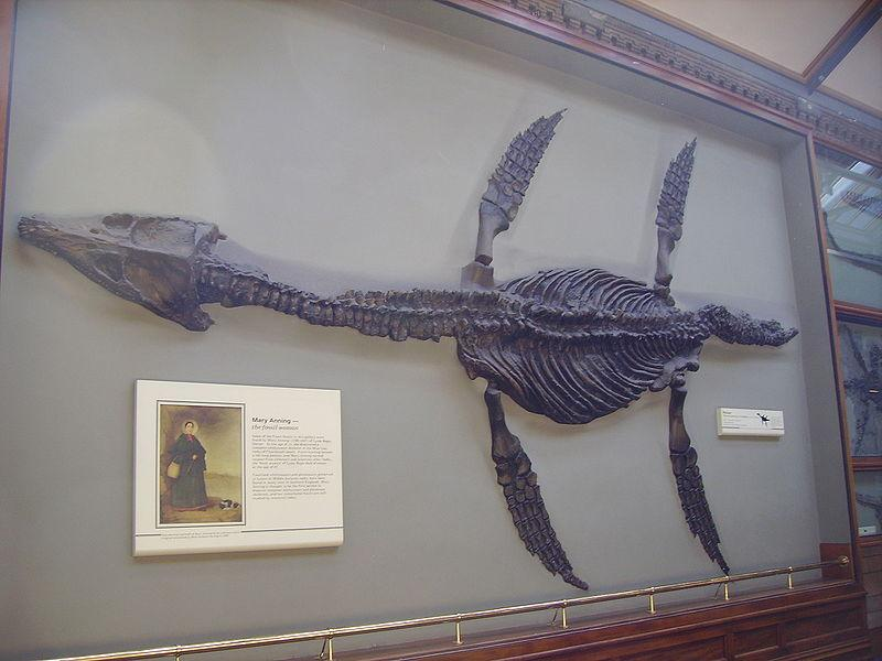800px-Rhomaleosaurus_&_Mary_Anning_plaque_NHM.jpg