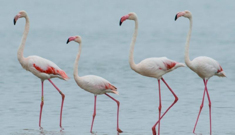 Flamingolar Foto Alper Tüydeş.jpg