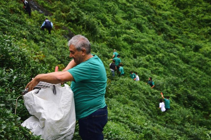 Çay üreticisi Foto: Eren Dağıstanlı