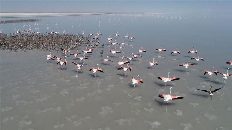 flamingo AA arşiv