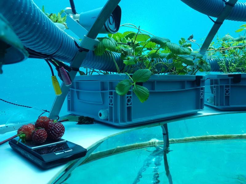 su altı tarımı