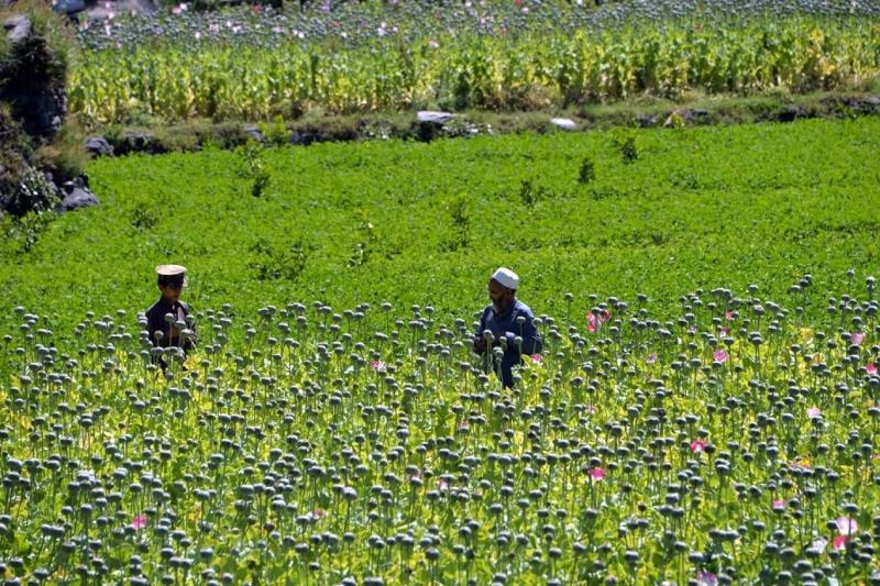 Afganistan'da haşhaş ekimi. Taliban'ın tavrı merak ediliyor.jpg