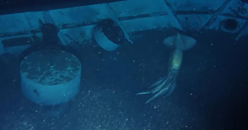 giant-sea-creature-oceanx.jpg