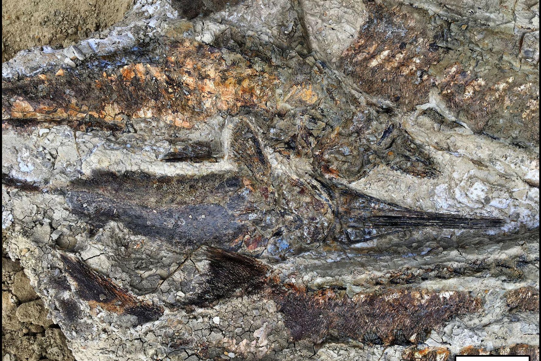 fish-fossils.jpeg