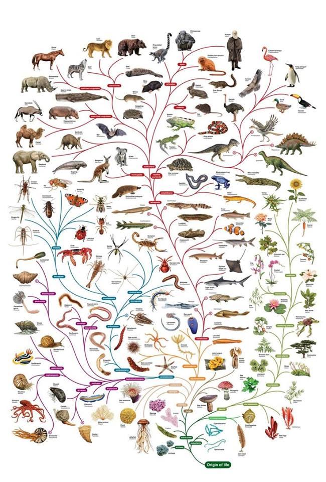 filogenetik-yasam-agaci.jpg